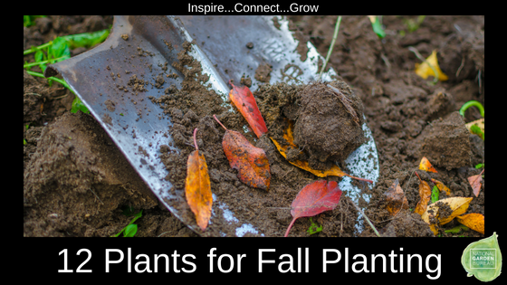 12 plants for a fall harvest - National Garden Bureau #gardeningtips