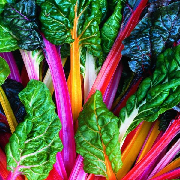 Swiss Chard Bright Lights - perfect for Fall Planting - National Garden Bureau