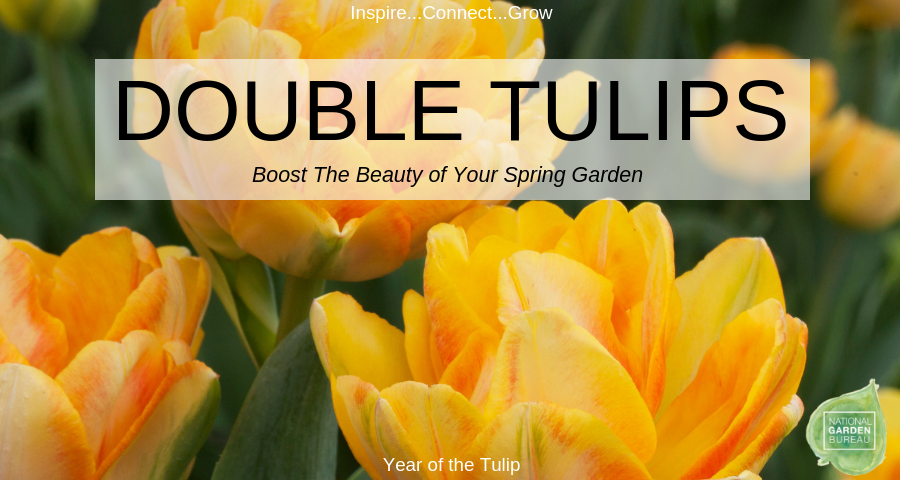 Boost the beauty of your spring garden with Double Tulips - National Garden Bureau