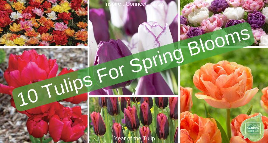 10 New Tulip Varieties For A Beautiful Spring Color