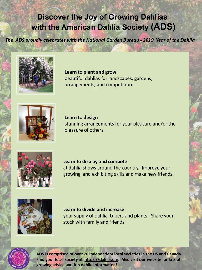 Join the American Dahlia Society - Year of the Dahlia