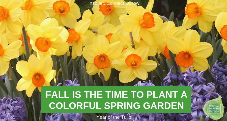 Fall is the Time to Plant a Colorful Spring Garden - National Garden Bureau