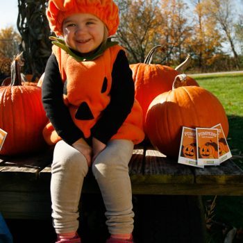 Pumpkin Adia from American Meadows - Year of the Pumpkin - National Garden Bureau