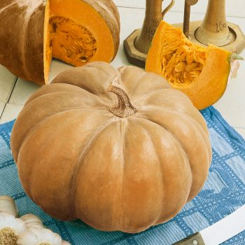 Pumpkin Autumn Buckskin from Seeds By Design - Year of the Pumpkin - National Garden Bureau