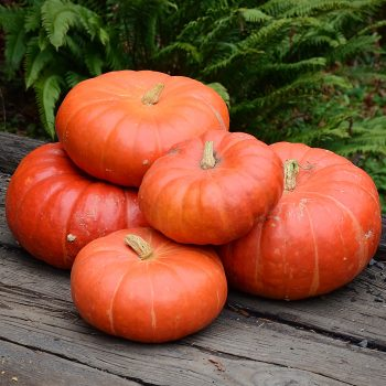 Pumpkin Cinderella by Territorial Seed Company - Year of the Pumpkin - National Garden Bureau