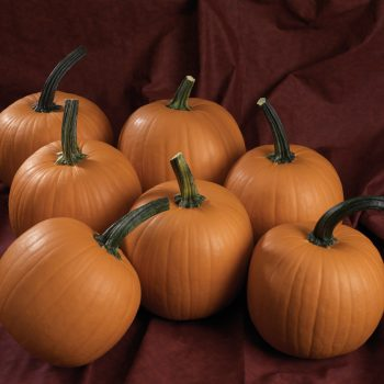 Pumpkin Hijinks from All-America Selections - National Garden Bureau