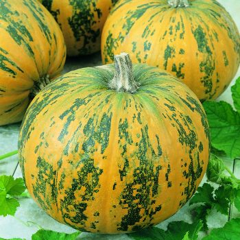 Pumpkin Pepitas by Seeds By Design - Year of the Pumpkin - National Garden Bureau