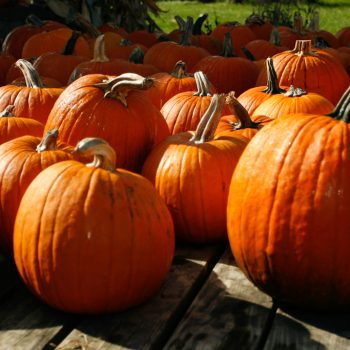 Pumpkin Pumpkins by american Meadows - Year of the Pumpkin - National Garden Bureau