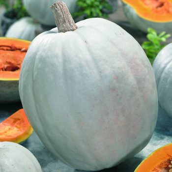 Pumpkin Super Moon by Seeds By Design - Year of the Pumpkin - National Garden Bureau