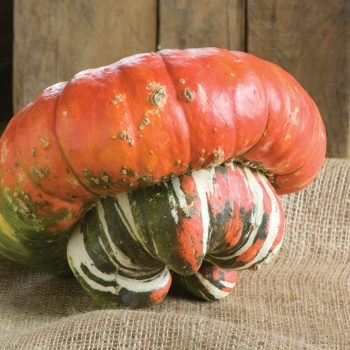 Pumpkin Turks Turban by Johnnys Selected Seeds - Year of the Pumpkin - National Garden Bureau