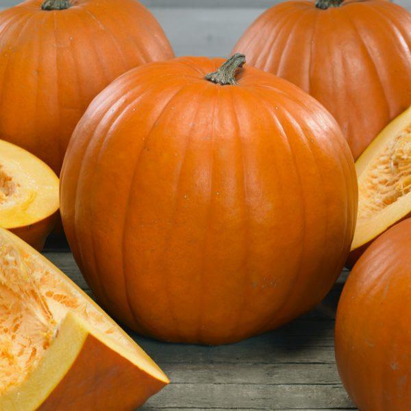 Pumpkin Young Beauty by Seeds By Design - Year of the Pumpkin - National Garden Bureau