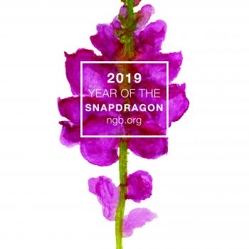 Year of the Snapdragon - National Garden Bureau