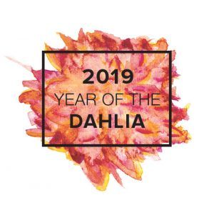 2019 Year of the Dahlia