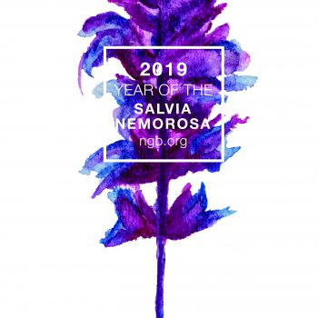 Year of the Salvia nemorosa