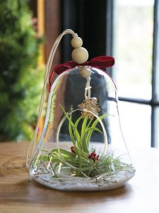 Christmas Bell Air Plant from Gardeners Supply