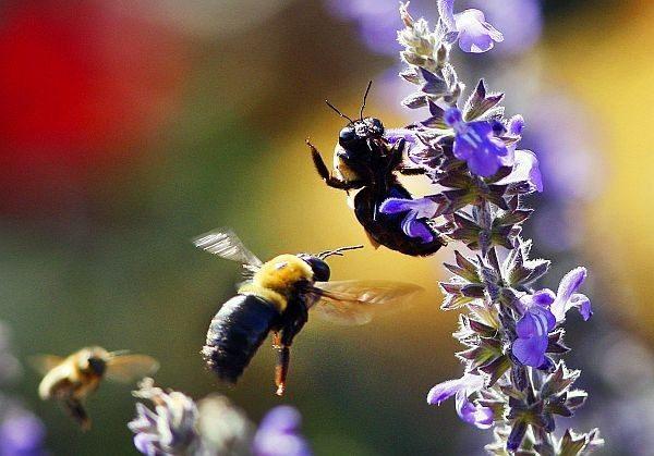 Grow a pollinator garden