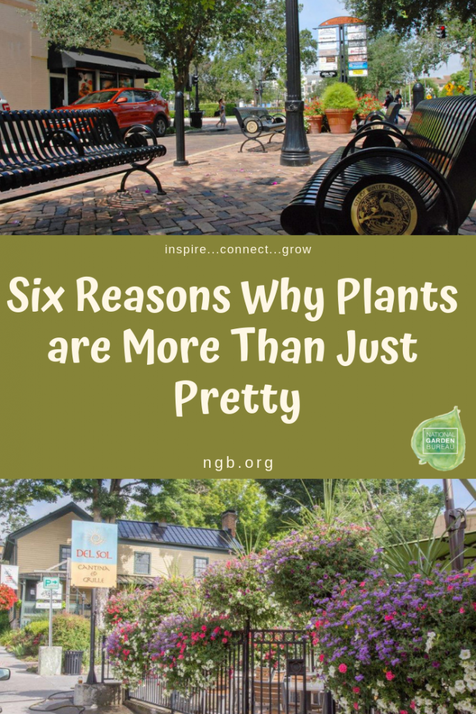 National Garden Bureau - Six Reasons Why Plants are More Than Just Pretty