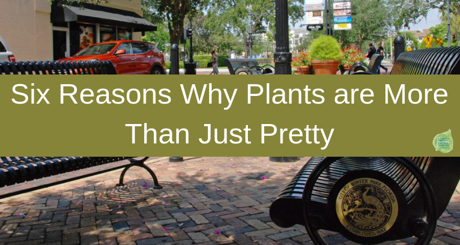 Six Reasons Why Plants are More Than Just Pretty - National Garden Bureau