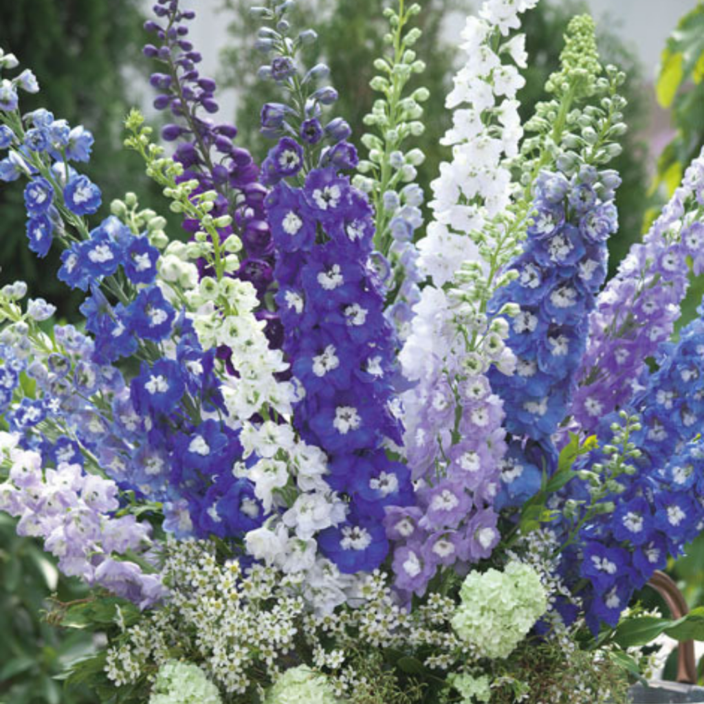 Delphinium – Aurora Deep Purple - Grow Your Own Cut Flower Garden - National Garden Bureau