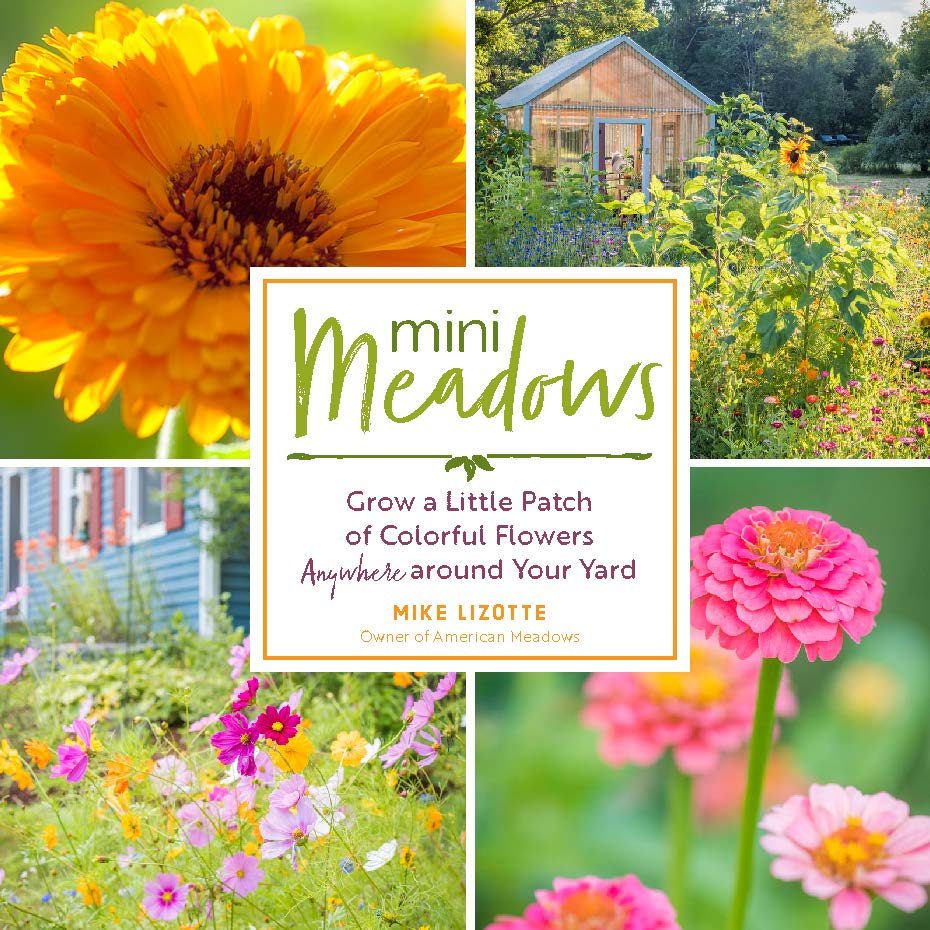 Mini Meadow - Grow a Little Patch of Colorful Flowers Anywhere around your Yard - National Garden Bureau