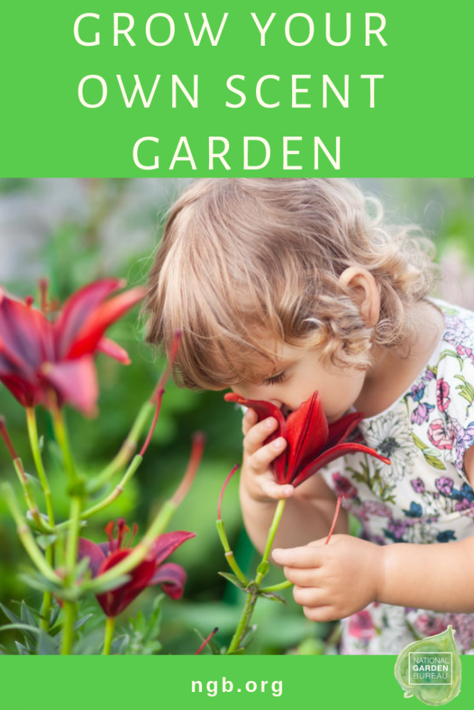 Grow Your Own Scent Garden with National Garden Bureau - There are so many different plant varieties that will bring the delight of Fragrance to your garden!