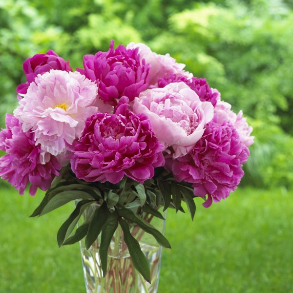 The Best Flowers for Homegrown Bouquets - National Garden ...