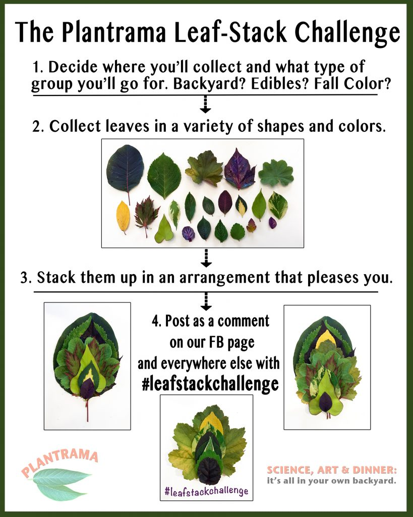 Leaf Stack Flyer from Plantrama - National Garden Bureau