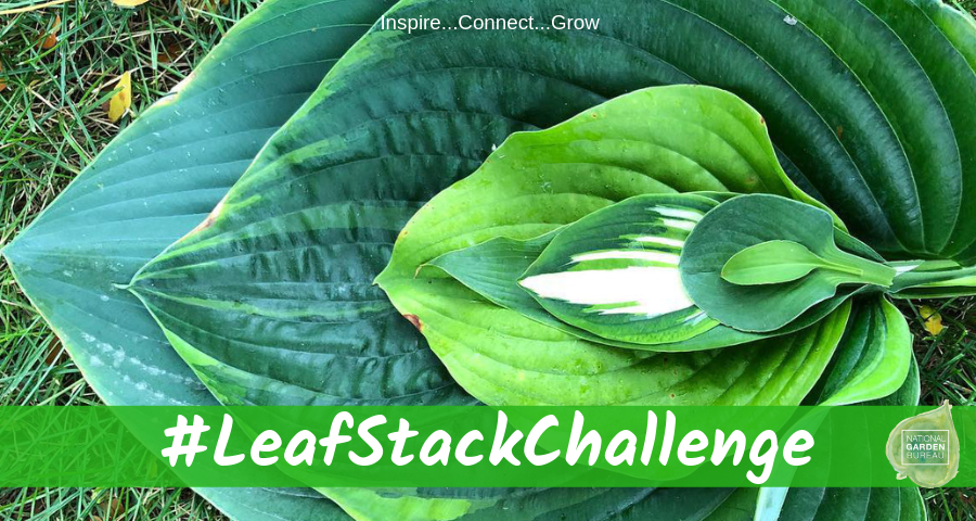 Leaf Stack Challenge - National Garden Bureau