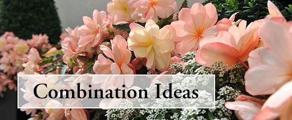 Combination plant ideas