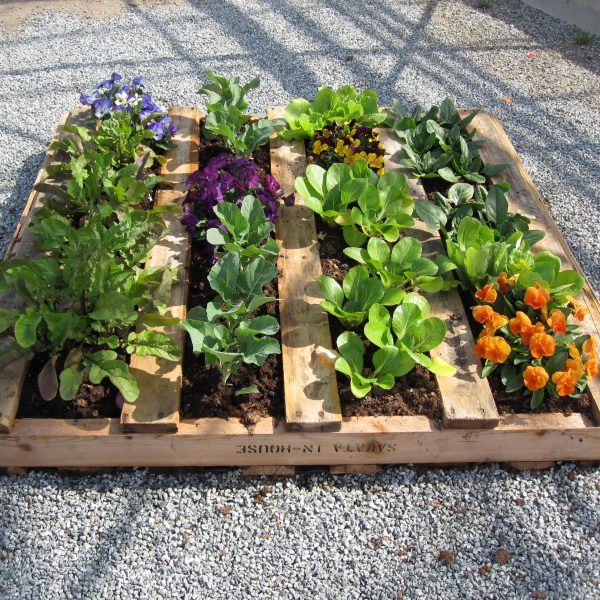 Pallet Planting for Grillscaping - Grillscaping is planting herbs, vegetables and flowers you can use in your meals and drinks right next to and around where your grill is located - National Garden Bureau