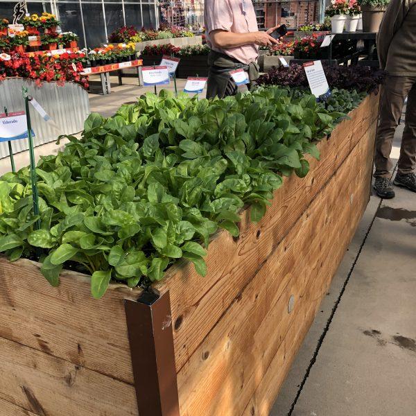 Raised Cedar bed with greens - National Garden Bureau