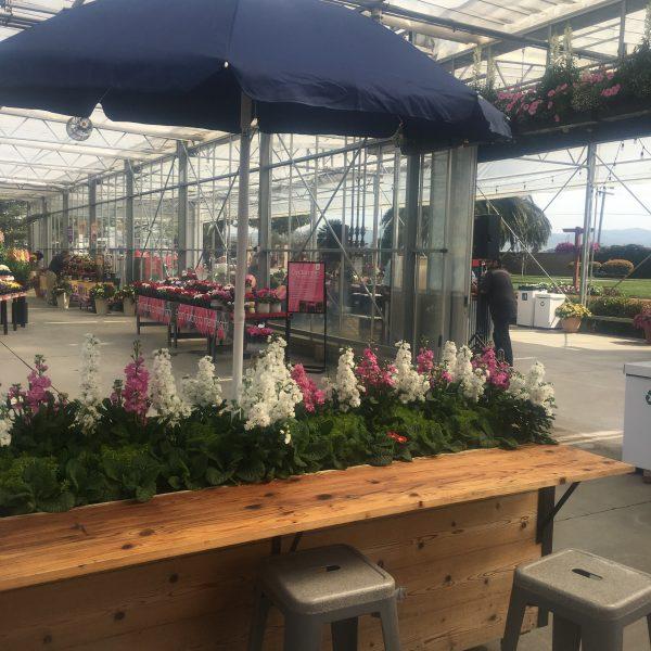 Garden Bar with decorative annuals - National Garden Bureau