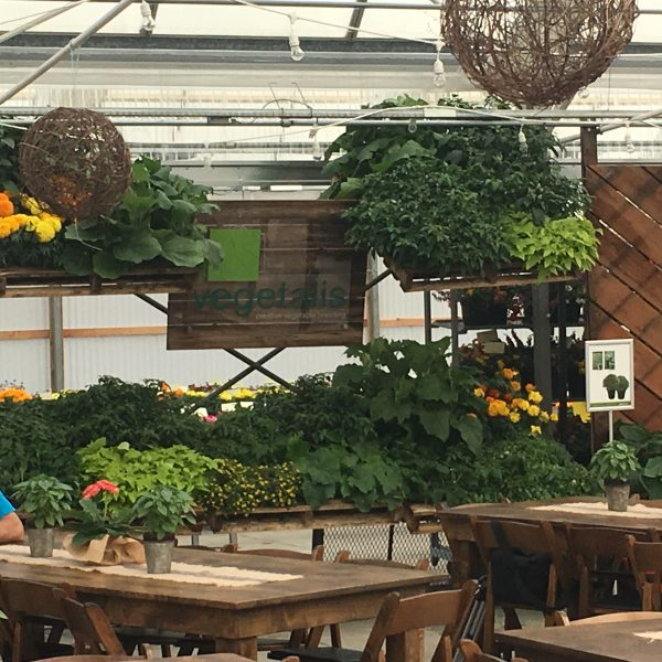 Pallet plantings hanging up high - Grillscaping is planting herbs, vegetables and flowers you can use in your meals and drinks right next to and around where your grill is located - National Garden Bureau