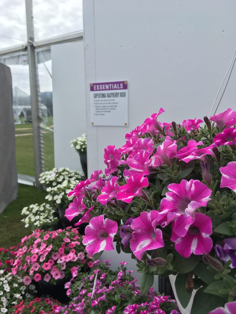 Supertunia Raspberry Rush - Plants to grow in your garden - National Garden Bureau