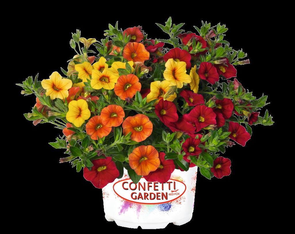 Confetti Garden Hawaiian Summer - Pollinator Container Garden - National Garden Bureau