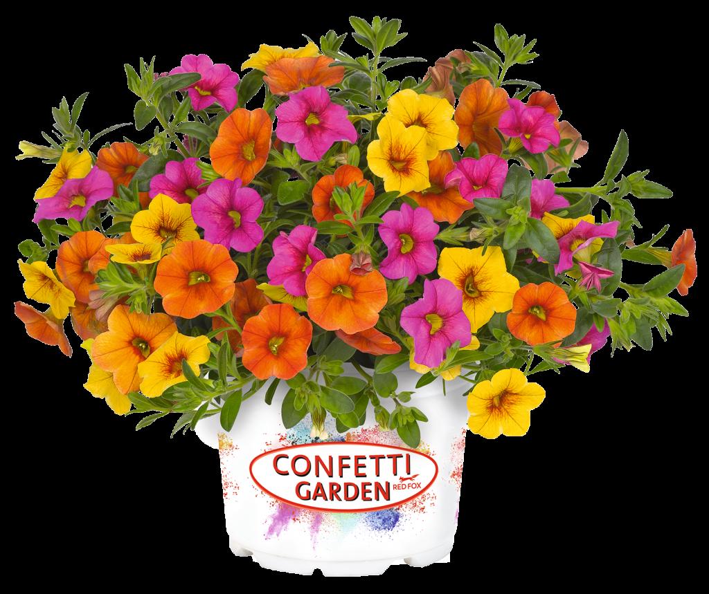 Confetti Garden Hawaiian Kalani - Combination Pollinator Garden - National Garden Bureau