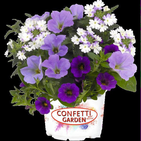 Confetti Garden Shocking Blue - Combination for Pollinators - National Garden Bureau
