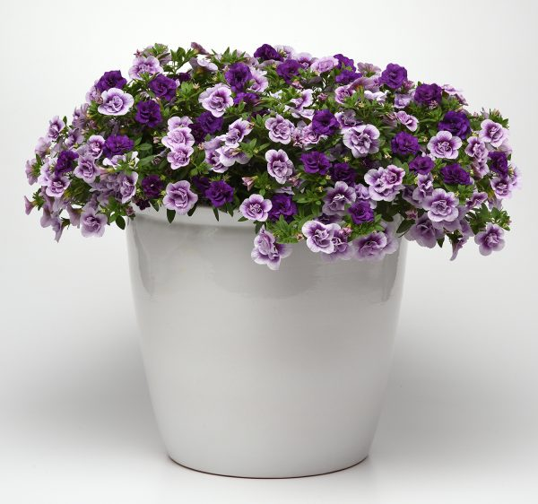 Trixi® On The Double - Combination Planters for Pollinators - National Garden Bureau