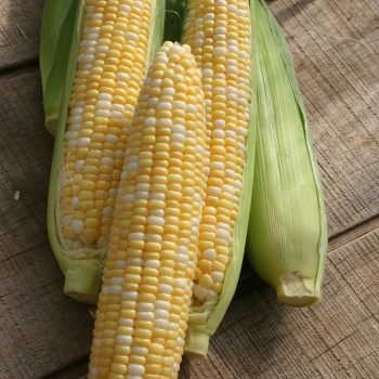 Corn Allure by Garden Trends - Year of the Corn - National Garden Bureau Corn-