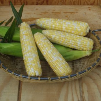 Corn Cameo by Garden Trends - Year of the Corn - National Garden Bureau