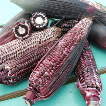 Corn Double Red by Whaley Seed - Year of the Corn - National Garden Bureau