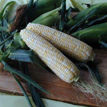 Corn Harris by Garden Trends - Year of the Corn - National Garden Bureau