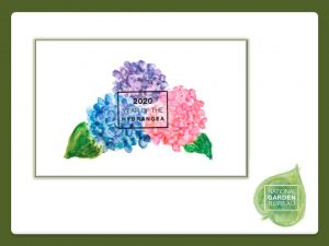 cover slide for Year of the Hydrangea slideshare