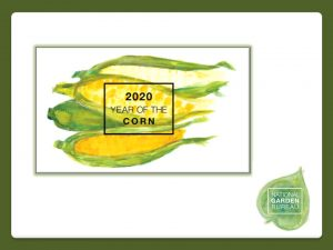 2020 is the Year of the Corn