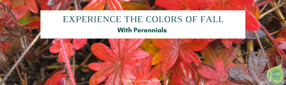 Experience The Colors of Fall with Perennials - National Garden Bureau