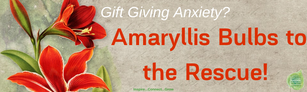 No Gift Giving Anxiety when you give Amaryllis Bulbs this holiday season - National Garden Bureau