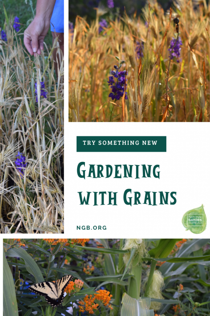 Gardening with Grains - Try something new - National Garden Bureau