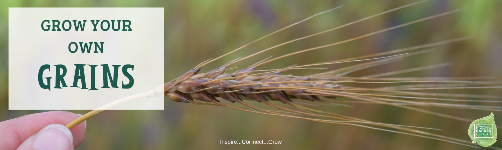 Grow Your Own Grains - National Garden Bureau
