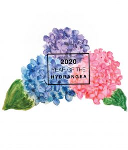 2020 is the year of the Hydrangea - National Garden Bureau