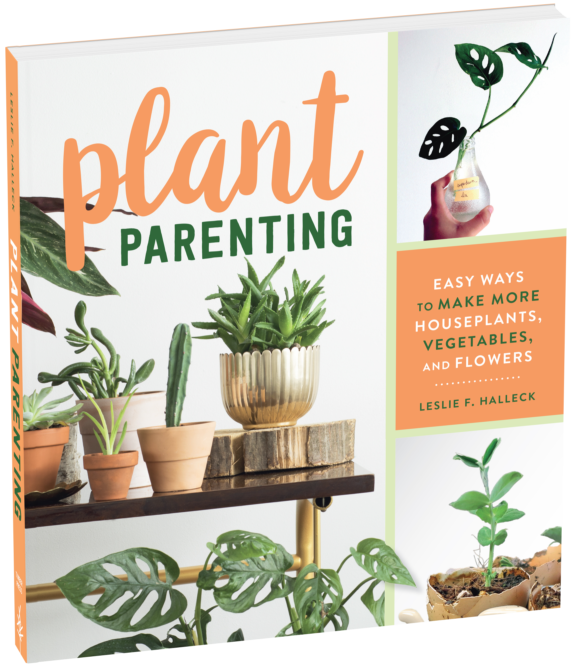 Plant Parenting - Easy Ways to Make More Houseplants, Vegetables, and Flowers - National Garden Bureau